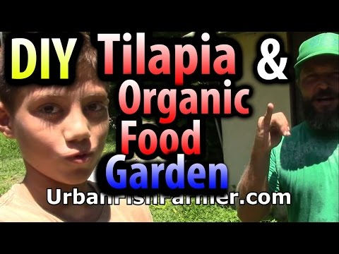 DIY Tilapia & Organic Food Garden