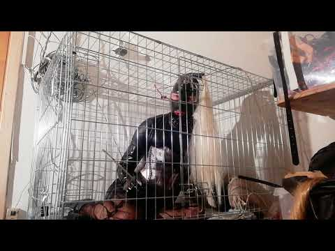 Smoking latex doll put in a dog Cage