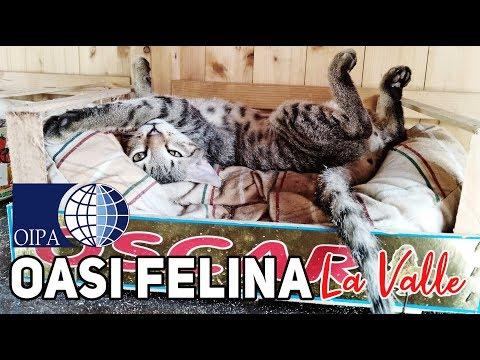 Benvenuti all'Oasi felina La Valle