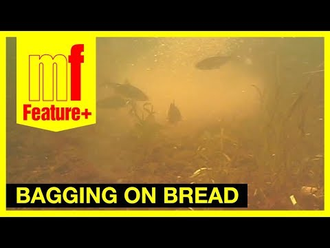 Bagging on bread – Rob Hewison catching roach on the River Great Ouse plus underwater footage.