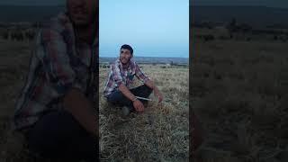 Mikail tekdemir  gülamin  2019 yeni official  kürdçe