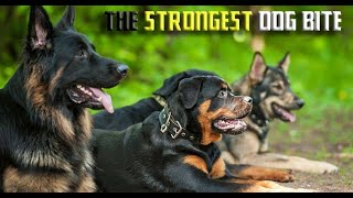 The DOG with the most POWERFUL BITE ⭐ TOP 10 Strongest Dog's Bite Force