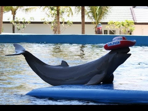 дельфины позируют для фото