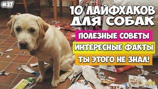 10 ЛАЙФХАКОВ ДЛЯ ВЛАДЕЛЬЦЕВ СОБАК(10 лайфхаков для владельцев собак, которые упростят жизнь вашей собаке. Если у вас есть собака, то вам повезл..., 2016-02-12T14:03:38.000Z)
