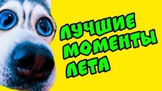 ЛУЧШИЕ МОМЕНТЫ ЛЕТА!! (Хаски Бандит) Говорящая собака