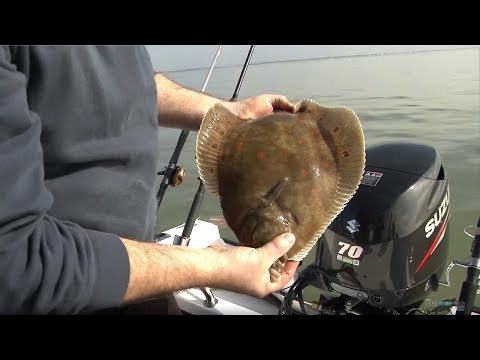 Fishing for Flatfish - Rigs, Tips & Tactics - CATCH MORE FISH!