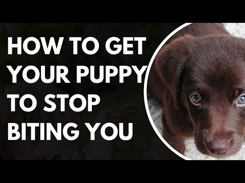 how-to-make-your-puppy-stop-biting-you---how-to-make-your-puppy-stop-biting-you-now