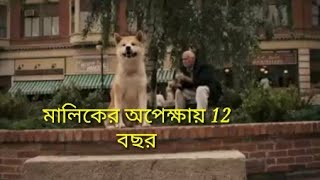 odvut Akita dog breed facts in Bengali | Hachiko Dog | Popular dog breed | Dog Facts Bengali
