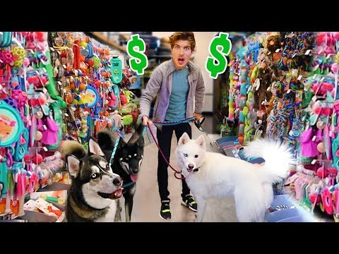 Buying My Dogs Everything They Touch!