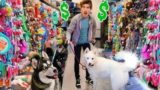 buying-my-dogs-everything-they-touch