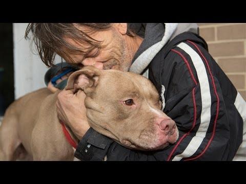 Helping Pets in Hurricane Sandy