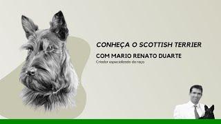 Palestra Conheça o Scottish Terrier