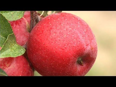 Prairie Yard & Garden: History of Minnesota Apple Development