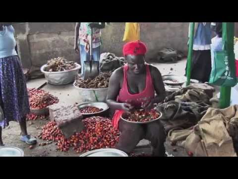 Sustainable Palm Oil: The Difference Fair Trade Makes