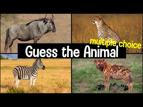 Guess the Animal Sound Game | 20 Animal Sounds Quiz | Multiple Choice