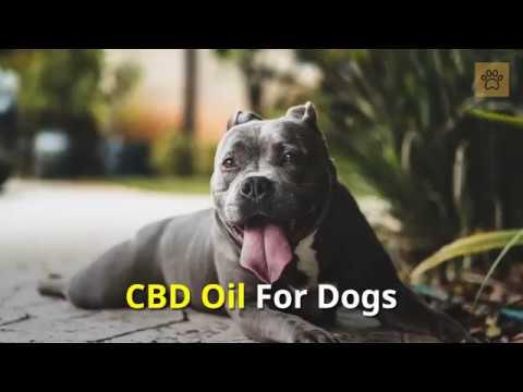 CBD Oil For Dogs / Hemp Oil For Dogs