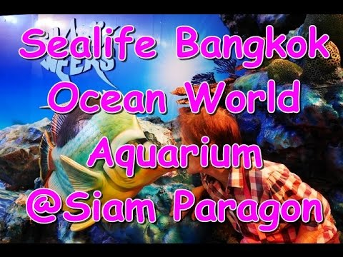 Sealife Bangkok Ocean World - Aquarium @Siam Paragon
