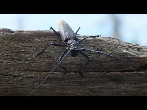 Как избавиться от жука короеда Самый лучший способ