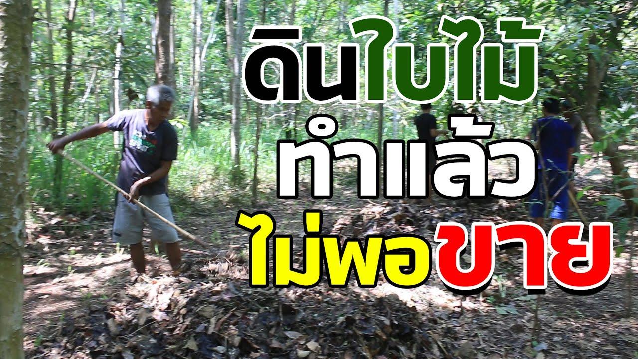 ทำเกษตรยุคใหม่ แบบวนเกษตร | คนรักษ์ป่า ep 105