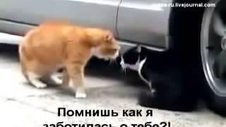 Как общаются Русские коты!!! Смотреть всем!