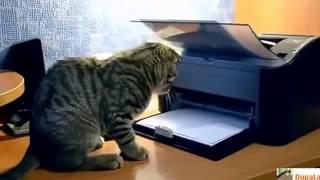 Прикольные кошки Топ подборка веселых моментов с котами Забавно смотреть!!