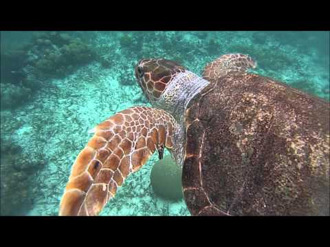 UF in Belize: Marine Ecology