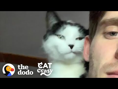 Cat And His Dad Are Obsessed With Each Other | The Dodo Cat Crazy