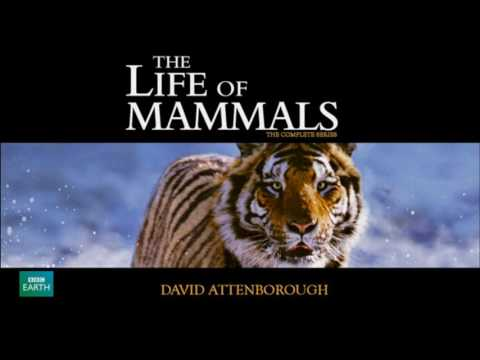 The Life of Mammals Soundtrack (2002)