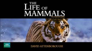 The Life of Mammals Soundtrack (2002)