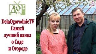 DelaOgorodnieTV САМЫЙ ЛУЧШИЙ КАНАЛ о Саде  и Огороде. Подписывайтесь