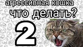Что делать если кошка стала агрессивной? 2 часть
