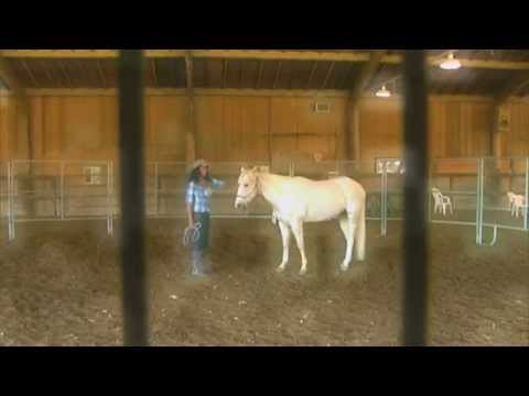 Monty Roberts Horses - Unbridled- RECON - Military Videos - The Pentagon Channel