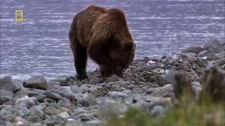 Дикая природа России  Сибирь  Тайга  Документальные фильмы National Geographic