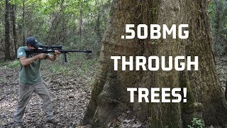"""How Big of a Tree Does it Take to Stop a .50BMG?  PUBG in Real Life """"Kill Bill V2!"""""""