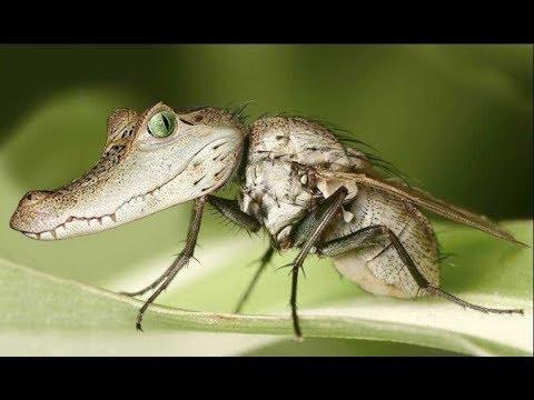 Вопрос: Мелкие мушки сильно кусают и кожа сильно опухает – как они называются?