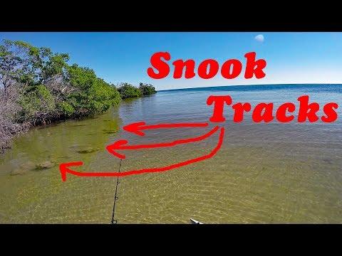 Snook Hunt 2019 Begins..How To Track Snook.