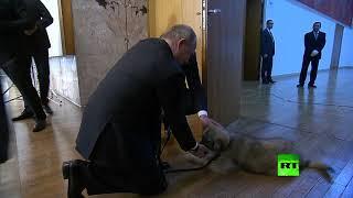 بالفيديو| رئيس صربيا يهدي بوتين الكلب