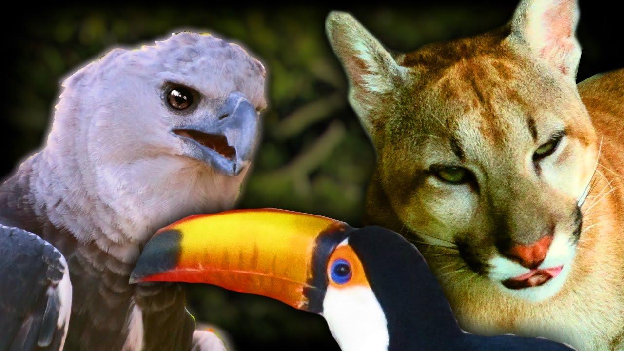 guyana animals zoo birds