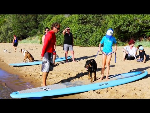 How to put your dog on a SUP - part 1