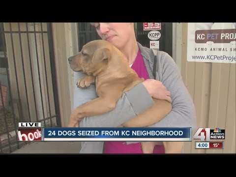 Pit bulls seized by city cared for at KC Pet Project