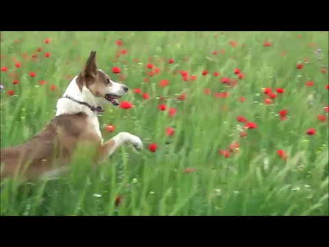 Nero, el perro saltarín (Nero, the jumping dog)
