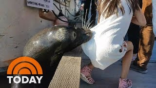 Family Of Little Girl Grabbed By Sea Lion Speaks Out | TODAY