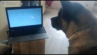 Собака смотрит кино