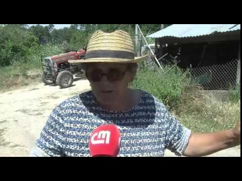 Fim do pesadelo de Moldes a vaca brava já foi capturada - Noticia Moldes 2/2