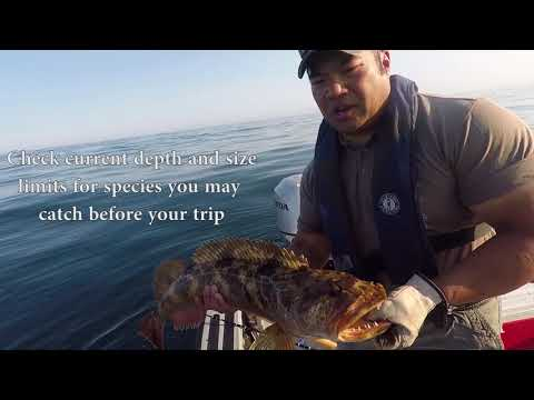 Rockfish And Lingcod Fishing Tips And Tricks