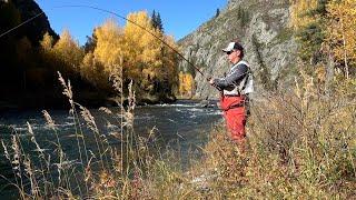 Рыбалка мечты хариус на каждом забросе Котлеты из ускуча Средство обороны от медведя Рыбалка ВКО