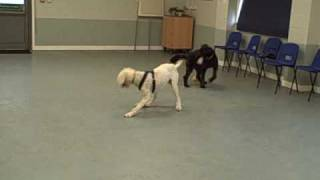 Dogs Trust Leeds: Dancer & Izzie Play