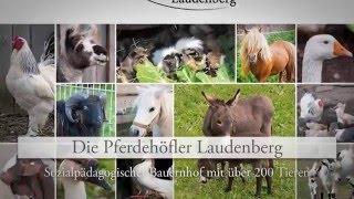 Urlaub auf dem Bauernhof Limbach Reiten lernen Neckar-Odenwald Reitschule Pferdehöfler
