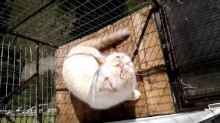Клетка для кота, на окно, своими руками. Кот Экзот.