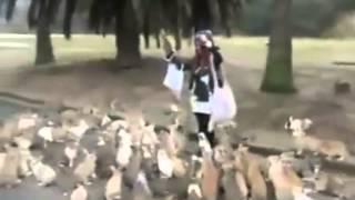 Мама кроликов | Стая или армия кроликов